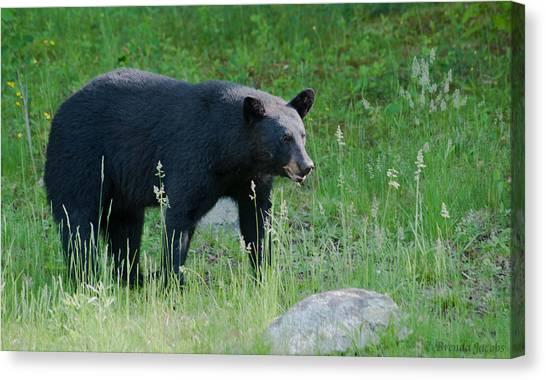 Black Bear Female Canvas Print