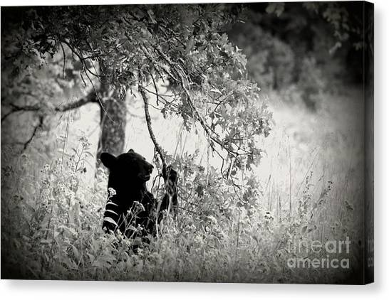 Black Bear Sitting Canvas Print