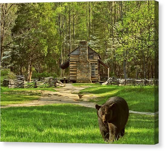 Black Bear Wandering II Canvas Print