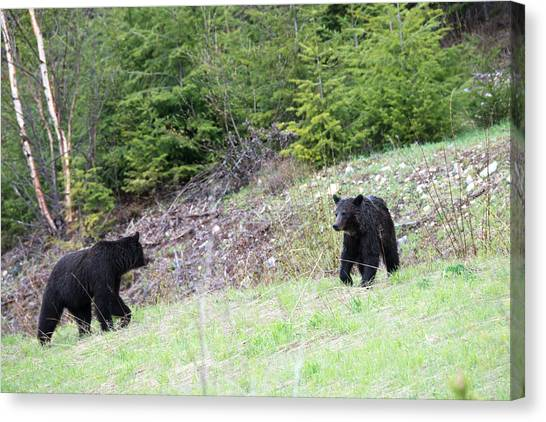 Black Bears In Motion Canvas Print by Andy Fung