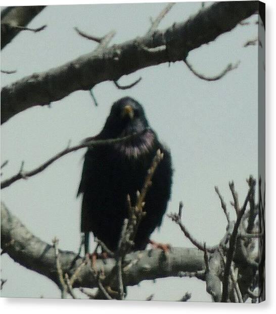 Foul Canvas Print - Black Bird by Kelli Stowe