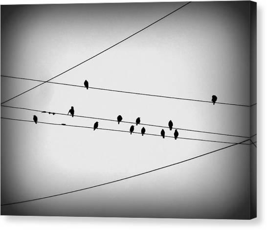 Black Birds Waiting Canvas Print