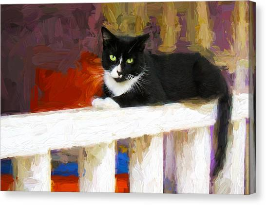 Black Cat In Color Series 2 Canvas Print