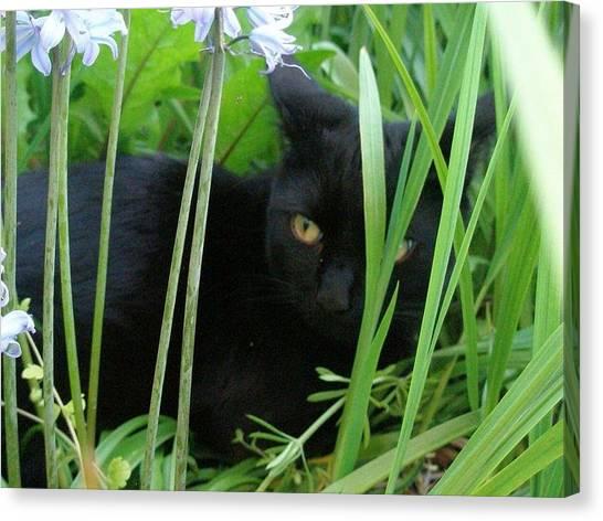 Black Cat In Long Grass Canvas Print