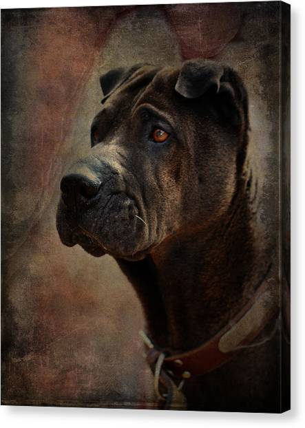 Black Chinese Shar-pei Canvas Print