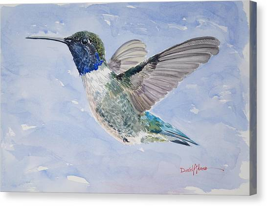 Da194 Black Chinned Hummingbird By Daniel Adams Canvas Print