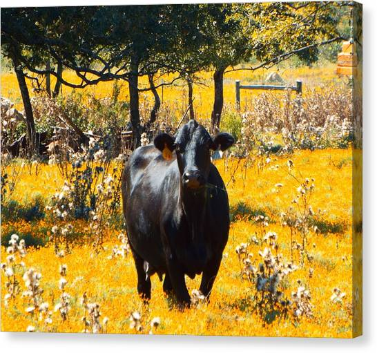 Black Cow And Field Flowers Canvas Print