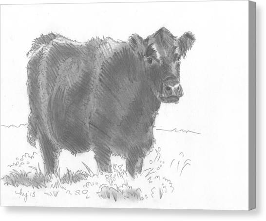 Black Cow Pencil Sketch Canvas Print