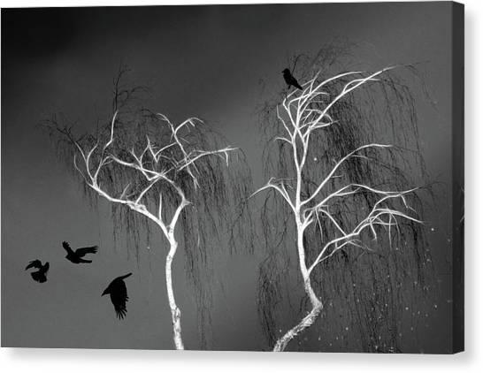 Black Crows - White Trees  Canvas Print