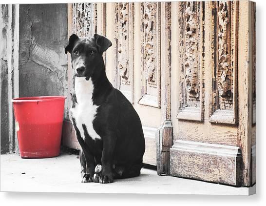 Black Dog Guarding A Vintage Wooden Door Canvas Print