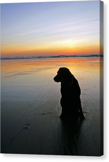 Black Dog Sundown Canvas Print