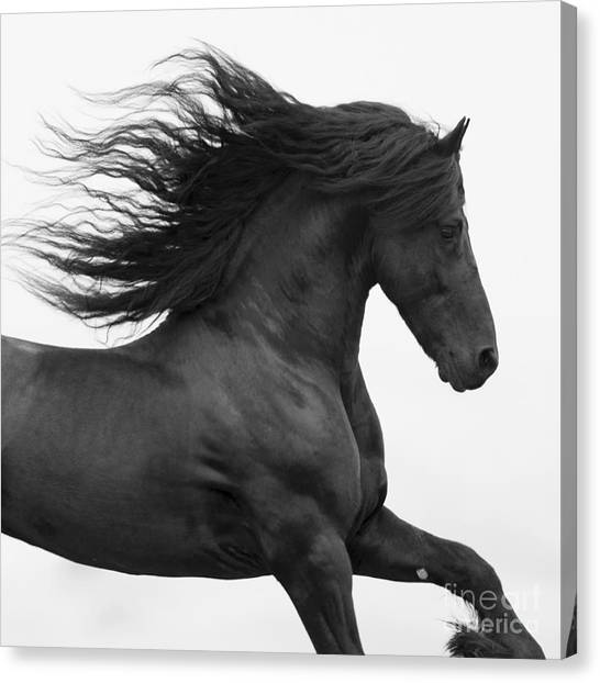 Baroque Art Canvas Print - Black Friesian Runs by Carol Walker