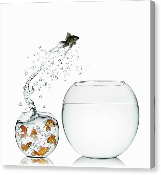 Black Goldfish Canvas Print