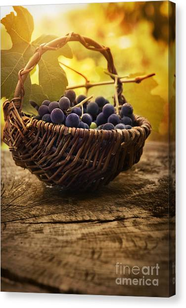 Mythja Canvas Print - Black Grapes by Mythja  Photography