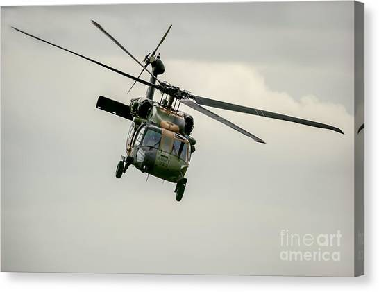 Black Hawk Swoops Canvas Print