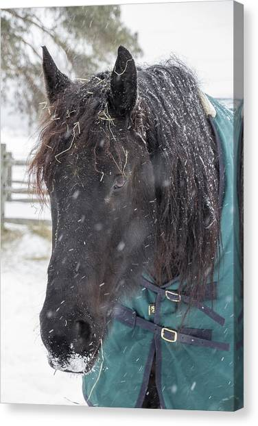 Black Horse In Snow Canvas Print