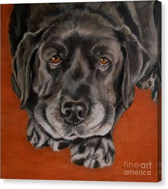 Black Labrador Rests Head Rescue Dog Canvas Print