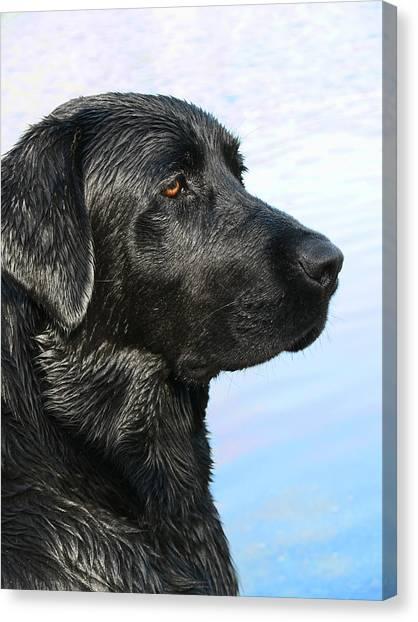 Black Labrador Retriever After The Swim Canvas Print
