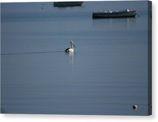 Black Line Pelican  Calm Water Canvas Print