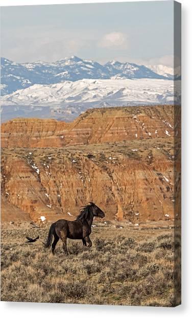 Black Stallion Canvas Print - Black Magic by Sandy Sisti