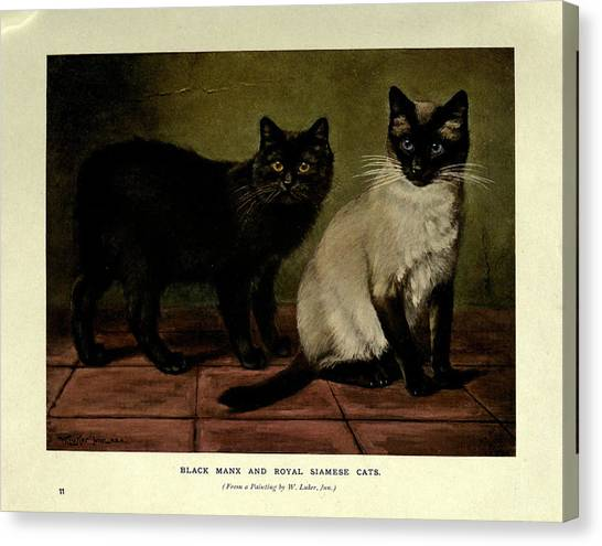 Manx Cats Canvas Print - Black Manx And Royal Siamese Cats by W Luker Jr