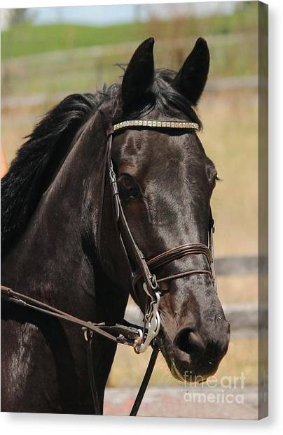Black Mare Portrait Canvas Print