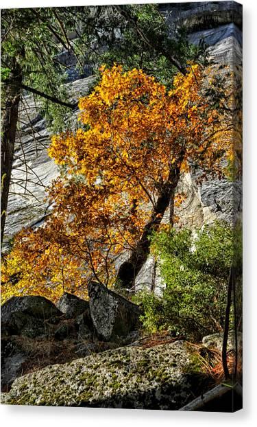 Orange Tree Canvas Print - Black Oak by Cat Connor