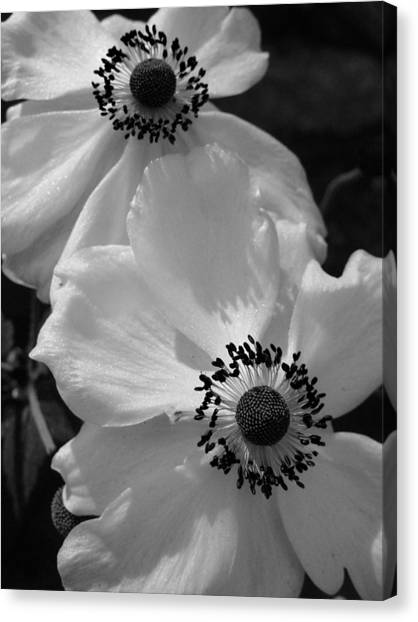 Black On White Canvas Print