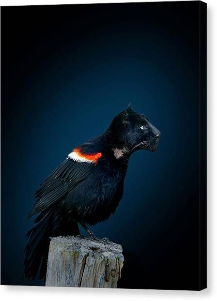 Panthers Canvas Print - Black Panther Combined With Bird by Fitim Bushati