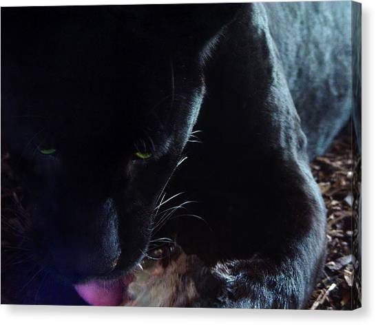 Black Panther Feeding - Closeup Canvas Print