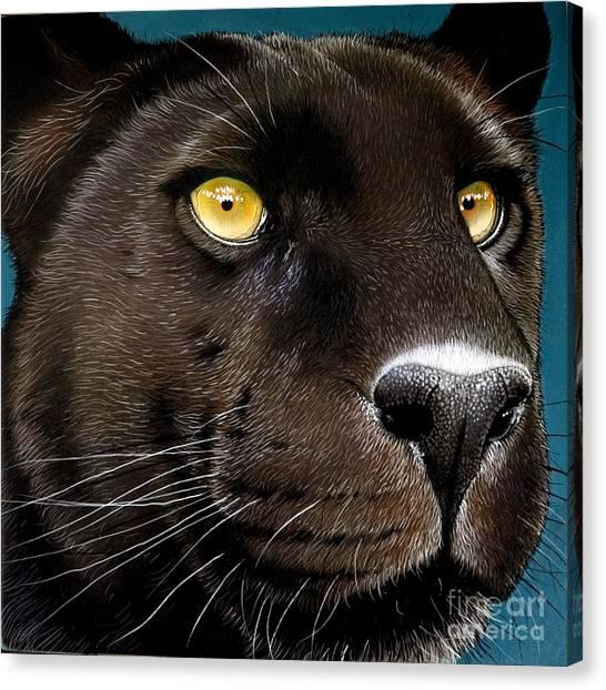 Panthers Canvas Print - Black Panther by Jurek Zamoyski
