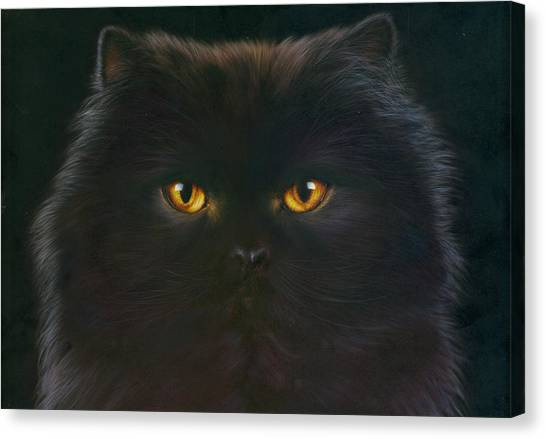 Andrew Canvas Print - Black Persian by MGL Meiklejohn Graphics Licensing