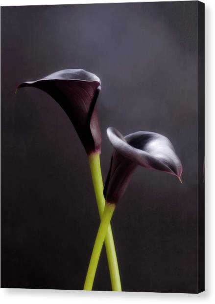 Black And White Purple Flowers Art Work Photography Canvas Print