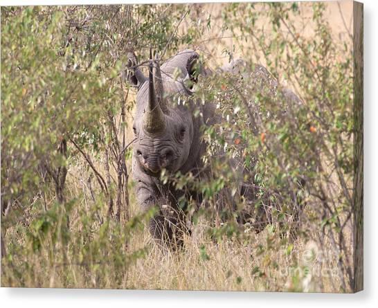 Rhinocerus Canvas Print - Black Rhino  by Chris Scroggins