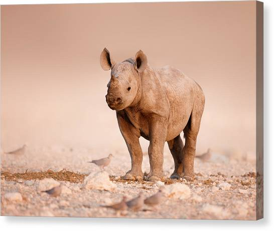 Salt Canvas Print - Black Rhinoceros Baby by Johan Swanepoel