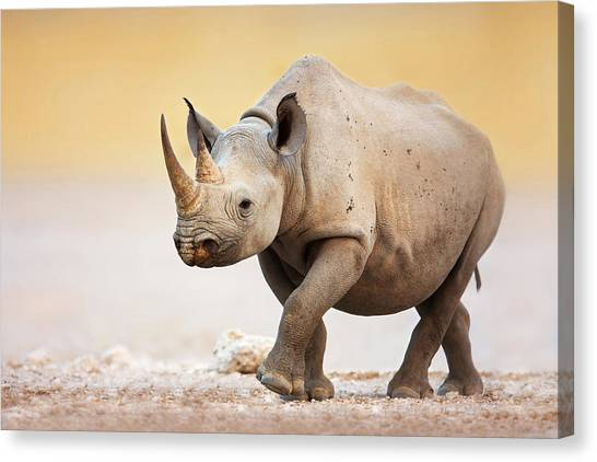 Salt Canvas Print - Black Rhinoceros by Johan Swanepoel