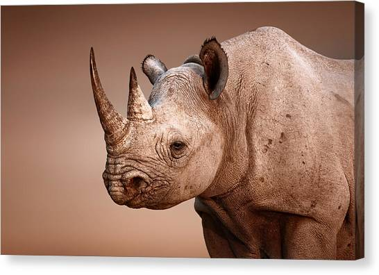 Large Mammals Canvas Print - Black Rhinoceros Portrait by Johan Swanepoel