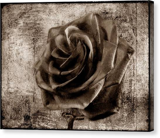 Red Rose Drawings Canvas Print - Black Rose Eternal Sepia  by David Dehner