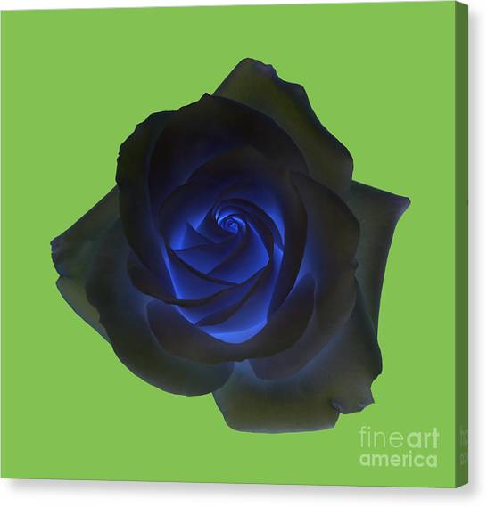 Black Rose With Vibrant Blue Petals At Centre On Green Canvas Print by Rosemary Calvert