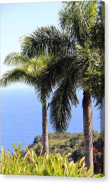Black Sand Beach Lookout Canvas Print