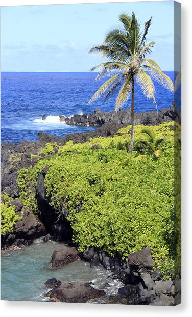 Black Sand Beach Lookout Park Canvas Print