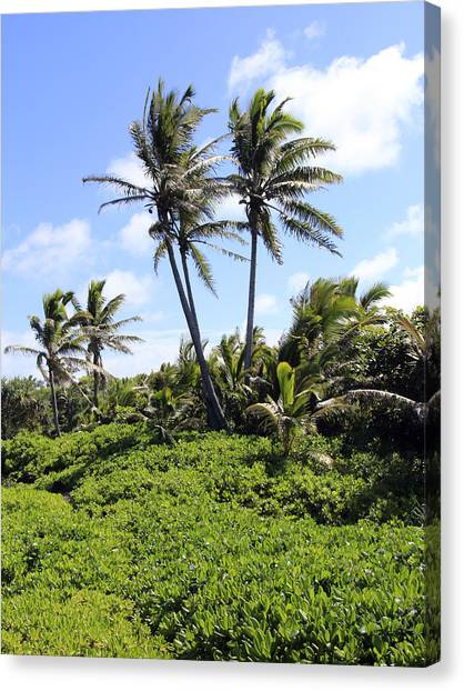Black Sand Beach Park Canvas Print