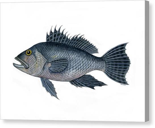 Black Sea Bass 3 Canvas Print