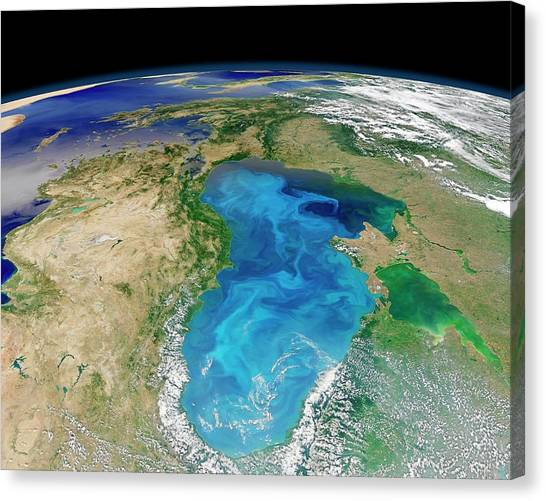 Satellite Canvas Print - Black Sea Phytoplankton Bloom by Nasa/norman Kuring