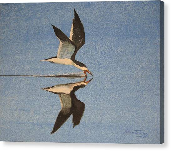 Black Skimmer Canvas Print