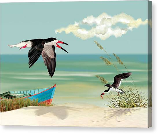 Black Skimmers Fishing Canvas Print