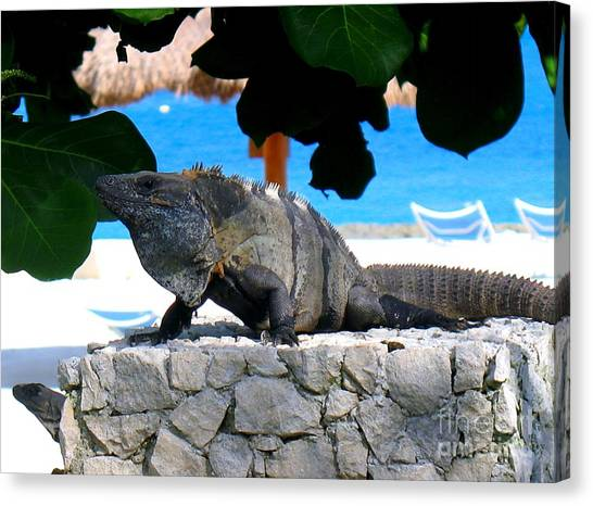 Canvas Print featuring the photograph Black Spiny Tailed Iguana by Patti Whitten