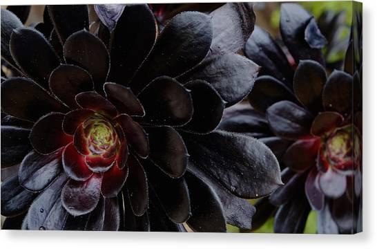 Black Succulent Canvas Print