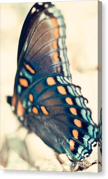 Butterfly Canvas Print - Black Swallowtail Butterfly by Kim Fearheiley