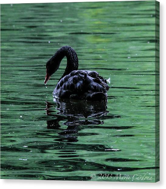 Black Swan I Canvas Print by Marie  Cardona
